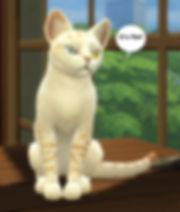 Flat Earth Cat on Table Sims 2.jpg