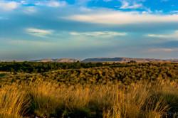 Pilbara 3