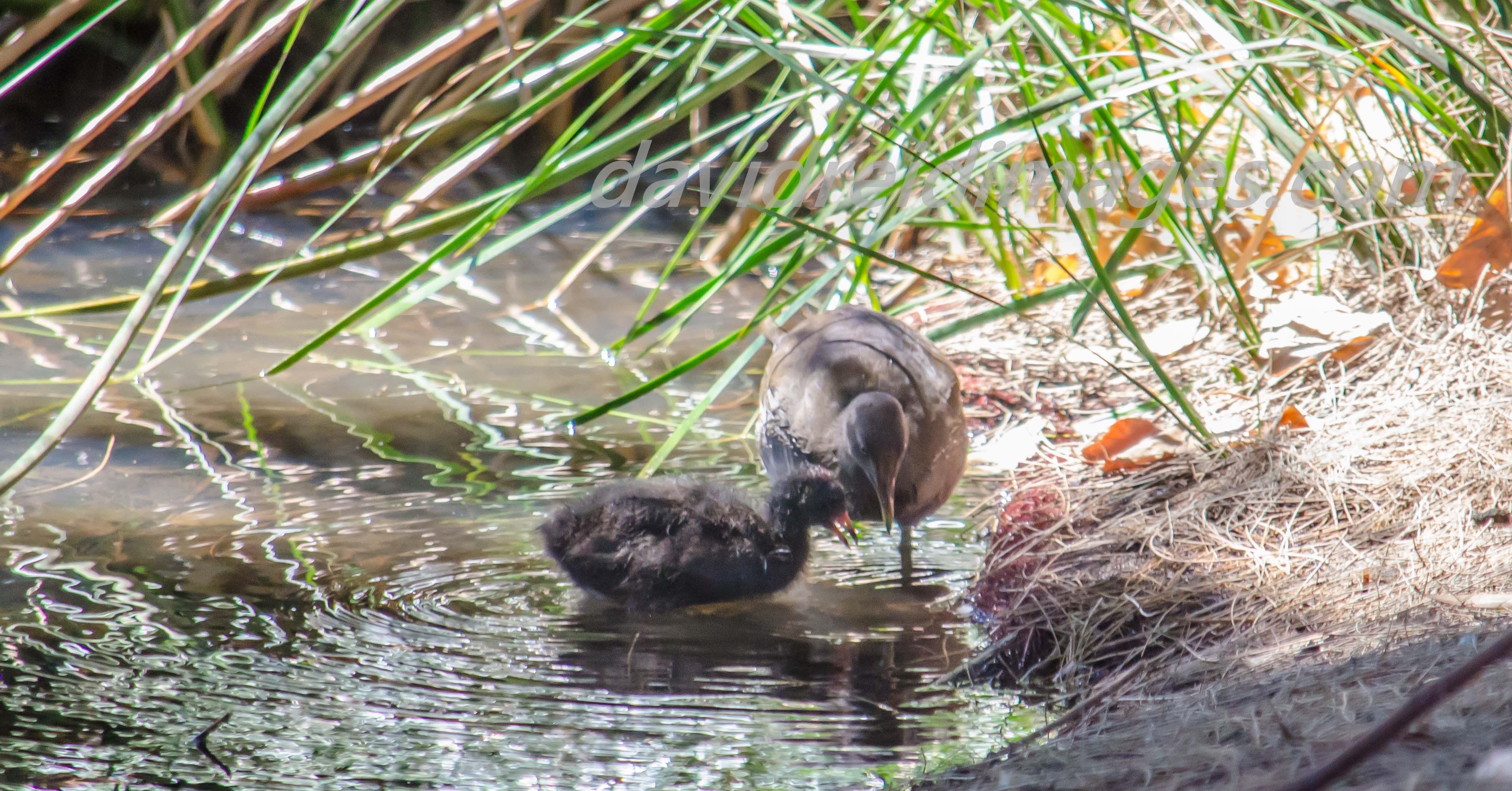 Water Birds.jpg
