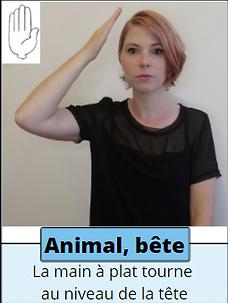 animal, bête.png