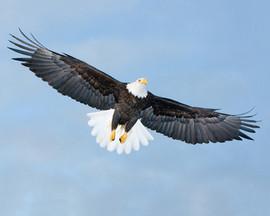 bill menzel - eagles 10.jpg