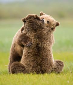 bill menzel - bears 07.jpg