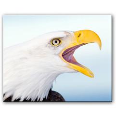bill menzel - eagles 13.jpg