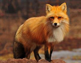 bill menzel - wildlife 04.jpg
