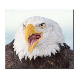 bill menzel - eagles 14.jpg