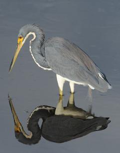 bill menzel - wildlife 03.jpg