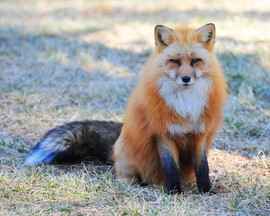 bill menzel - wildlife 05.jpg