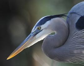 bill menzel - wildlife 02.jpg