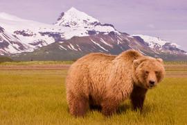 bill menzel - bears 10.jpg