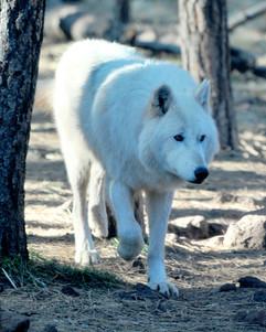 bill menzel - wildlife 09.jpg