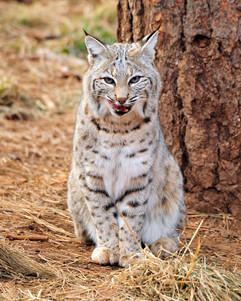 bill menzel - wildlife 12.jpg