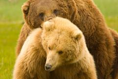 bill menzel - bears 11.jpg