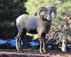 bill menzel - wildlife 10.jpg