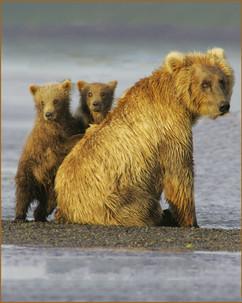 bill menzel - bears 12.jpg