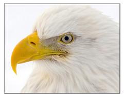 bill menzel - eagles 12.jpg