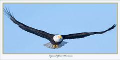 bill menzel - eagles 15.jpg