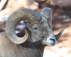 bill menzel - wildlife 08.jpg