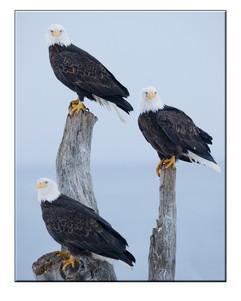 bill menzel - eagles 16.jpg