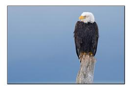 bill menzel - eagles 05.jpg