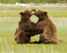 bill menzel - bears 09.jpg