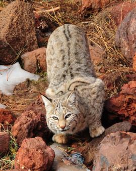 bill menzel - wildlife 11.jpg