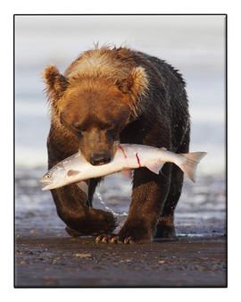 bill menzel - bears 01.jpg