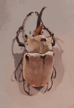 Elefantenkäfer