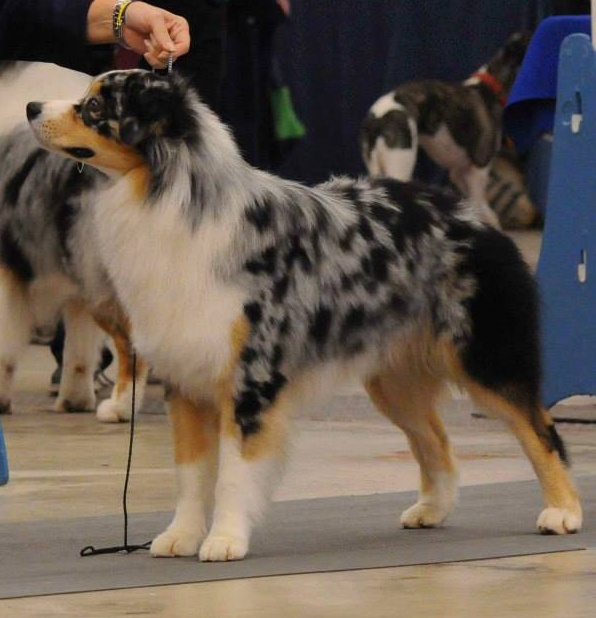 First AKC show 10.19.14