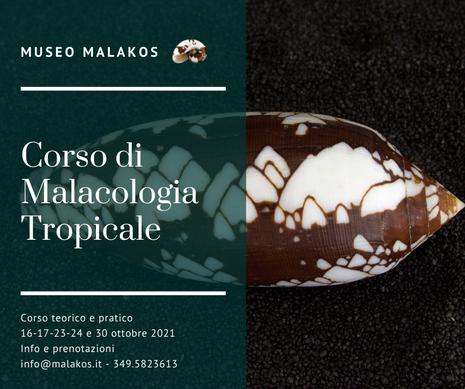 Corso di Malacologia Tropicale 2021