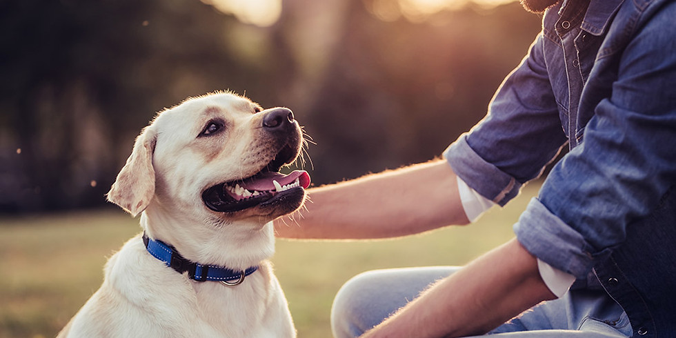 Pet Loss Recovery and Support Programme