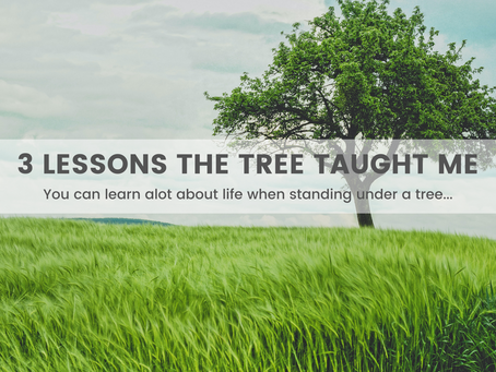3 Lessons The Tree Taught Me