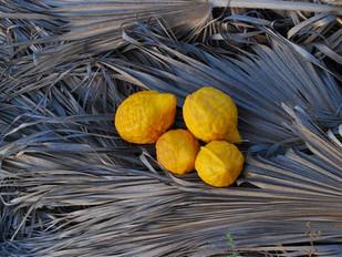 Značaj vitamina C u lečenju karcinoma