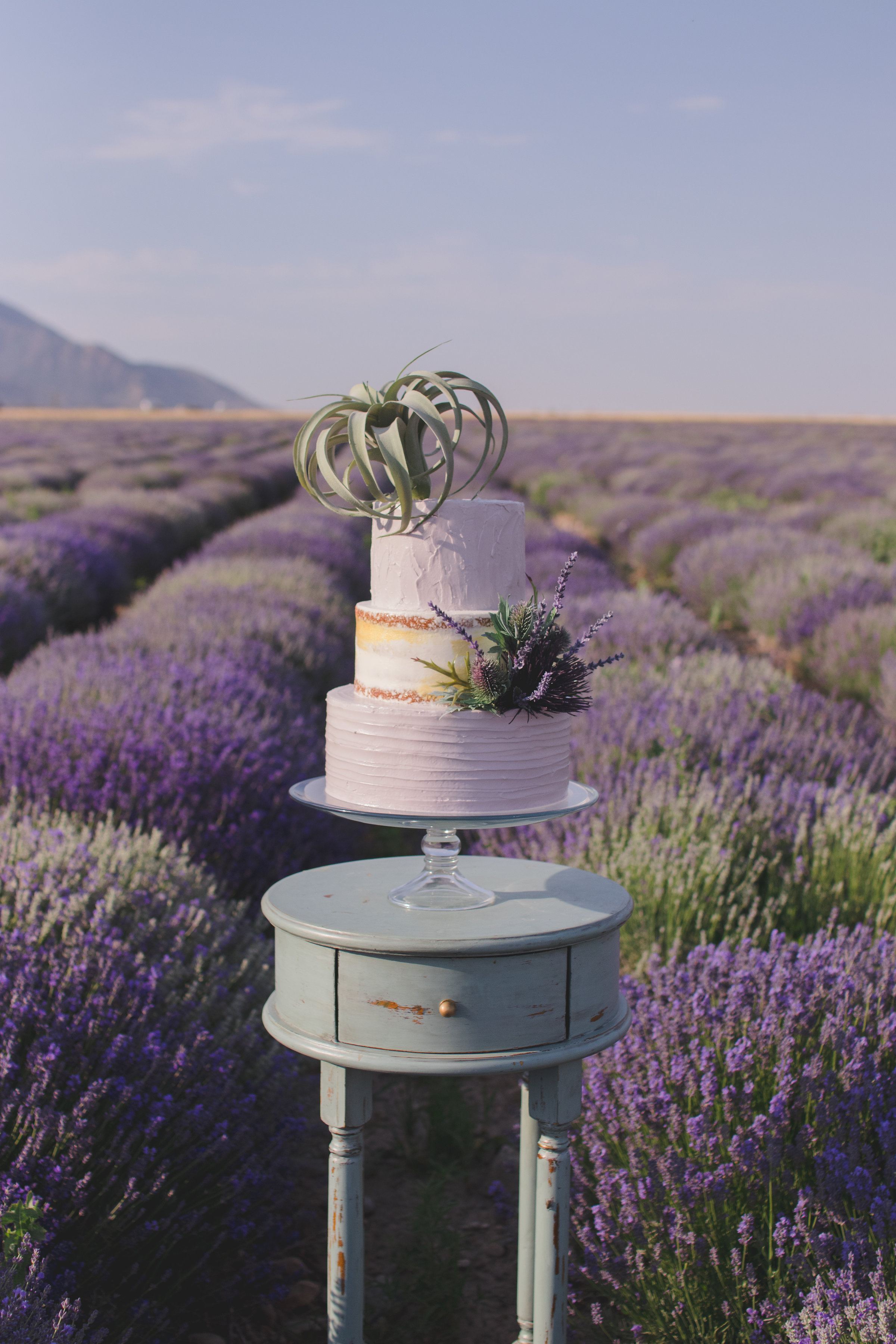 Mona Lavender Fields Cake