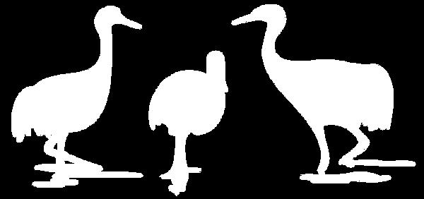 pfw birds logo white.png