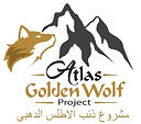 Atlas Golden Wolf Project Liz AD Campbell Morocco WildCRU