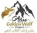 Atlas Golden Wolf Project Liz AD Campbell Morocco WildCRU