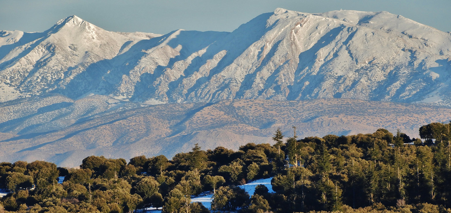 Atlas Mountains Morocco Ifrane National Park Liz AD Campbell Atlas golden wolf project