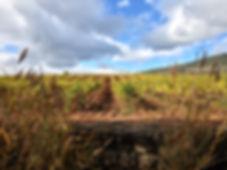 Rioja vineyard.JPG