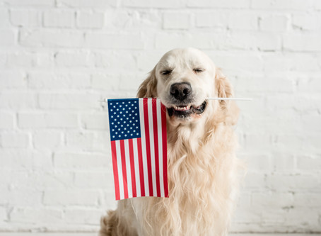 Why Dogs Freak Out About Fireworks