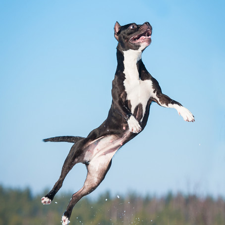 How to Teach Your Dog to Give High-Fives!And Other Fun Tricks for National Train Your Dog Month!