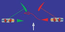 image de deux kitesurfeurs qui se croisent