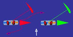 image de deux kitesurfeurs qui se suivent