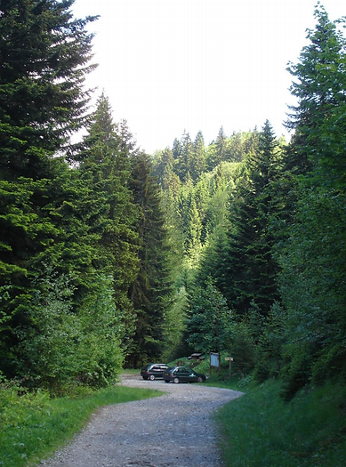 forêt avant tempête.png