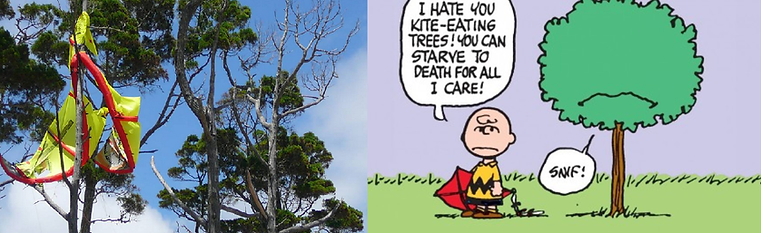 arbre et kite.png