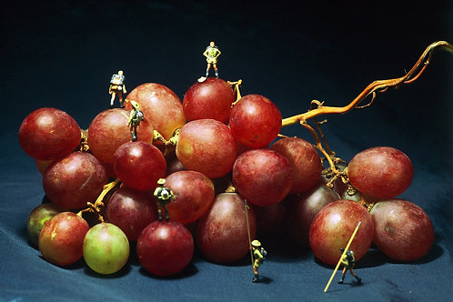 Grape Climbing