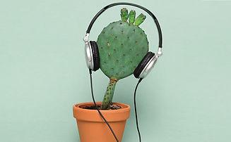 plant-whisperer-hero.jpg