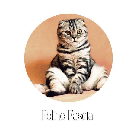 Feline Fascia