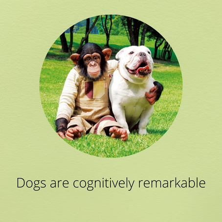 Dogs are cognitively remarkable