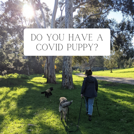 Do you have a pandemic puppy?