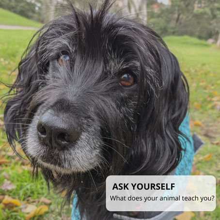 What do your animals teach you?